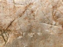 moss skały kamienia konsystencja tło sepiowy abstrakcyjne Fotografia wizerunek Zdjęcie Royalty Free