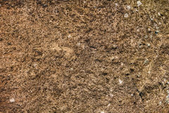 moss skały kamienia konsystencja Zdjęcia Stock