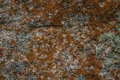 moss skały kamienia konsystencja Deseniowa tekstura natura kamienna bezszwowa konsystencja Obraz Royalty Free