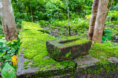 Moss, small flowerless plant growing in dense green clumps or mats Stock Photos