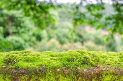 Moss, small flowerless plant growing in dense green clumps or mats Royalty Free Stock Photos