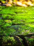 Moss on the floor. Moss is a small green plants that require high humidity Stock Photography