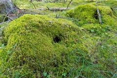 Moss sod Stock Photo