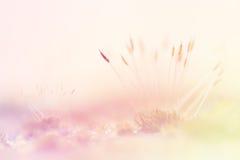 Moss Soft Focus For Background Royaltyfri Bild