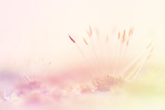 Moss Soft Focus For Background. With Pastel Filter royalty free stock image