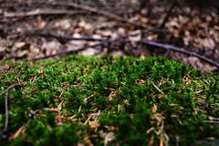 Moss somewhere in forests. Marco of a moss. Czech Republic royalty free stock photos