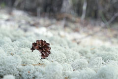 Moss, sphagnum, macro close. For designers, clean background, for filling Royalty Free Stock Image