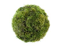 Moss sphere. Sphere formed from moss isolated on white Royalty Free Stock Photography