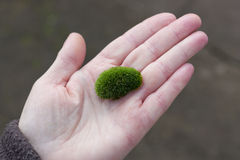 Moss sphere in palm. Green Moss sphere held in palm Royalty Free Stock Images