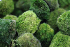 moss spheres background Royalty Free Stock Photos