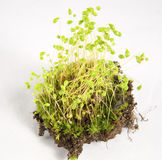 Moss Spores Royalty Free Stock Images