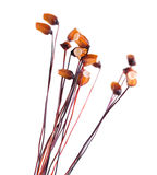 Moss sporophytes Stock Photo