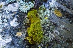 Moss Stock Photos
