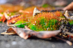Moss sprouts. Royalty Free Stock Photography