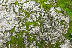 Moss on a stone Royalty Free Stock Photo