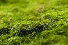 Moss on stone Stock Photo