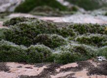 Moss on stone Stock Image