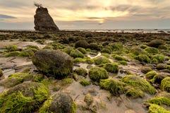 Moss Stone Fotografia de Stock Royalty Free