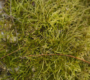 The moss. On the stone Royalty Free Stock Photo