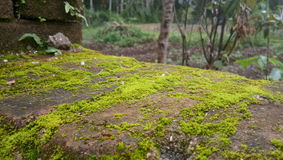 Moss Stone Photos stock