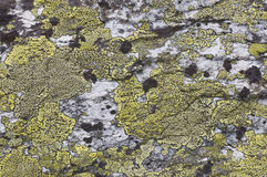 Moss on the stone Royalty Free Stock Image