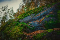 Moss on the stone. Abstract background royalty free stock image