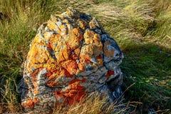 Moss Stone avec la longue herbe sauvage Photos stock