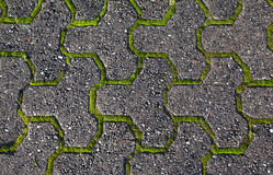 Moss and stone background Stock Image