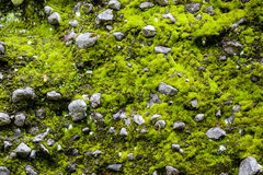 Moss and stone background Stock Photo