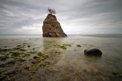 Moss With Stone Of Batu Luang Imagens de Stock
