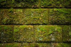 Moss on stone blocks wall Stock Photo
