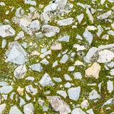 Moss and stone Stock Photo