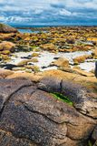 Moss stone and coastline in Brittany Bretagne, France.  royalty free stock image