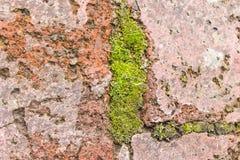 Moss Stone Concrete Detail Stock Foto