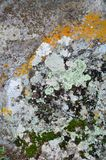 Moss on stone. Stone covered with moss colored for backgrounds Stock Photography