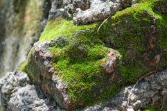 Moss Stone Daylight fotos de archivo libres de regalías