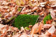 Moss stone in the fallen leaves. It is Moss stone in the fallen leaves Stock Photo