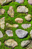 Moss on stone floor Royalty Free Stock Image