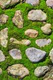 Moss on stone floor Royalty Free Stock Image