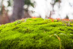 Moss on stone in the forest Stock Image
