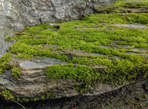 Moss on stone Royalty Free Stock Photography