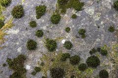 Moss on the stone. Green moss growing on the gray stone Stock Photo