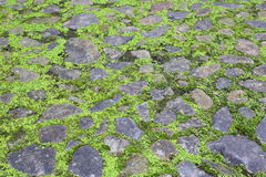 Moss stone ground Stock Images