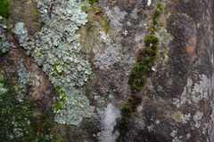 Moss on the stone Royalty Free Stock Photography