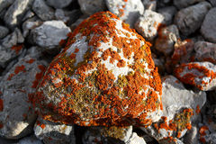 Moss stone at Kyrgyzstan wild mountains Stock Image