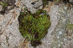 Moss on stone Stock Photography