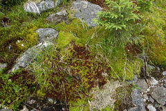 Moss on stone Royalty Free Stock Images