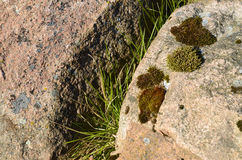 Moss on a stone rock. Moss and grass on a stone rock, background Stock Photos