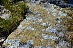 Moss on a stone rock. Moss and grass on a stone rock, background Stock Photography