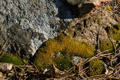 Moss in stone. Moss on the rock in the woods Stock Photo